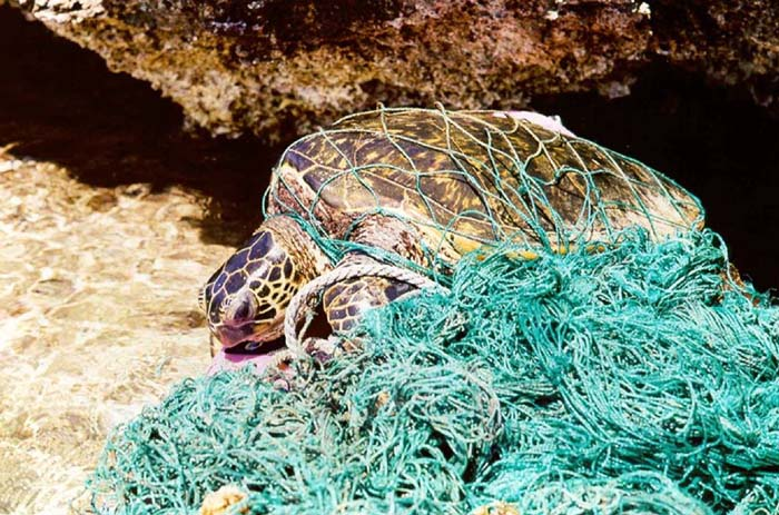 Tier-Plastikinsel