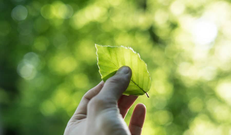 claudias weg zur nachhaltigkeit