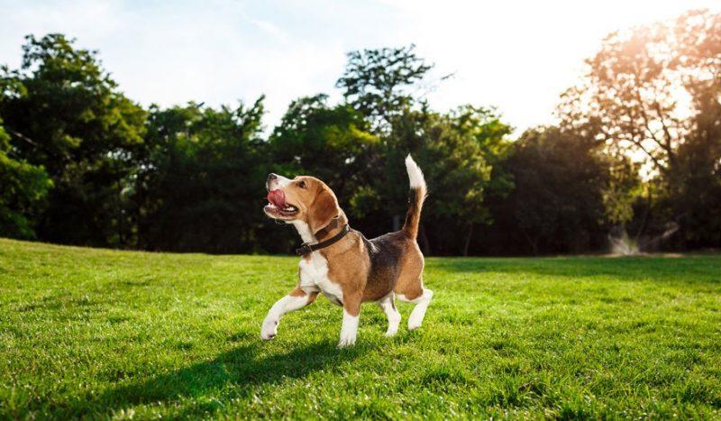 nachhaltig-mit-hund-