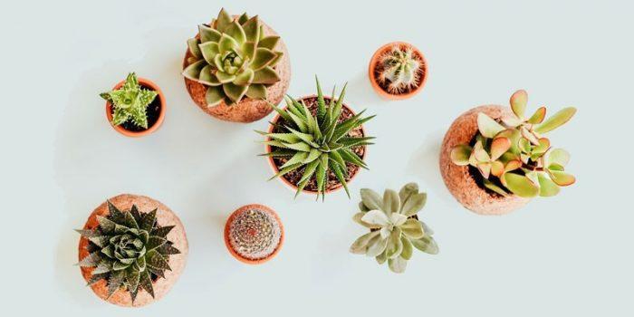 pflanzen fuer nachhaltigkeit im buero