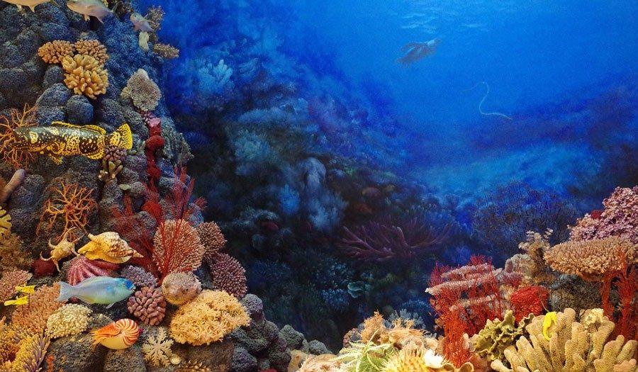 tierwelt.mikroplastik.auswirkungen.folgen.fische.krabbe