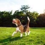 Nachhaltig mit Hund: Praktische Tipps & Produkte