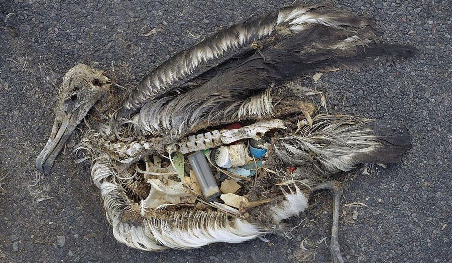 Plastikauswirkung auf die Tierwelt
