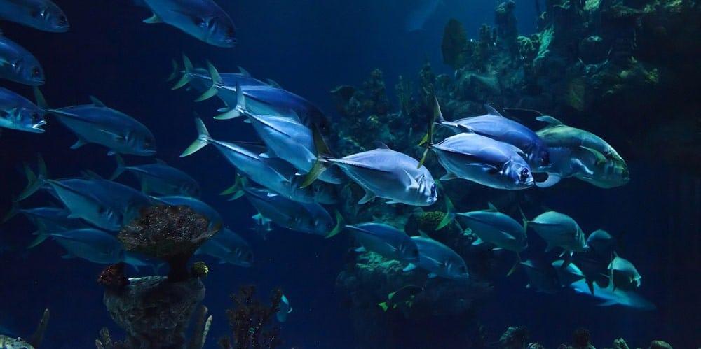 Plastik in der Tiefsee