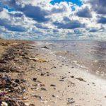 Plastikinseln & Plastikstrudel: Müll im Meer